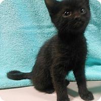 Adopt A Pet :: Nicole - Reston, VA