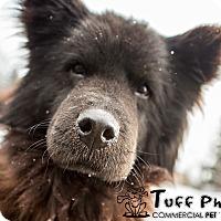Adopt A Pet :: Lennie - Toledo, OH