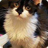 Adopt A Pet :: Kung Fu Panda - Trevose, PA