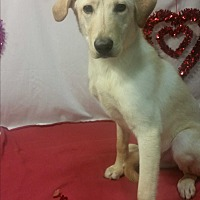 Adopt A Pet :: Kenny - Detroit, MI