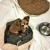 Adopt A Pet :: Wanda - Tavares, FL