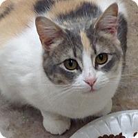 Adopt A Pet :: Bella - Santa Rosa, CA