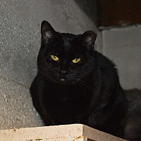 Adopt A Pet :: Karma - Colville, WA