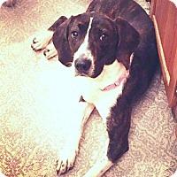 Adopt A Pet :: Garnet - Cool Ridge, WV