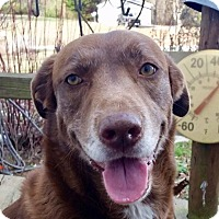Adopt A Pet :: Cookie - Washington, DC