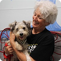 Adopt A Pet :: Little Man - Elyria, OH