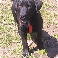 Adopt A Pet :: Simon meet me 4/29 - Manchester, CT