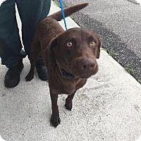 Adopt A Pet :: Tyco - Whiteville, NC