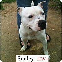 Adopt A Pet :: Smiley - Justin, TX