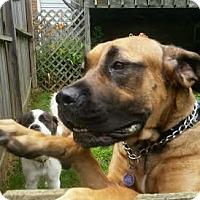 Adopt A Pet :: Jax - Ortonville, MI