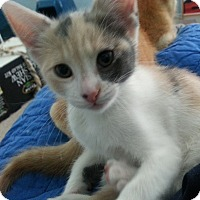 Adopt A Pet :: Christine - Irvine, CA