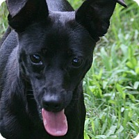 Adopt A Pet :: Izzie - Lufkin, TX