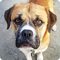 Adopt A Pet :: Mikey*ADOPTED!* - Chicago, IL