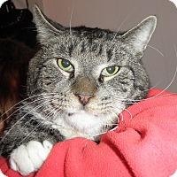 Adopt A Pet :: Big Easy - Highland Park, NJ