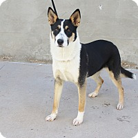 Adopt A Pet :: A29 Kelly - Odessa, TX