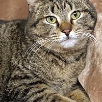 Adopt A Pet :: Lafayette - St Louis, MO