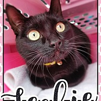 Adopt A Pet :: Feebie - Edwards AFB, CA