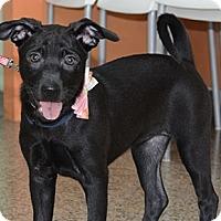 Adopt A Pet :: Anna - Surrey, BC
