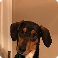 Adopt A Pet :: Michele - Wytheville, VA