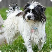 Adopt A Pet :: Harry - Abilene, TX