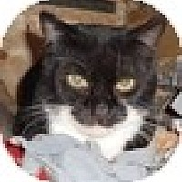 Adopt A Pet :: Marley - Vancouver, BC