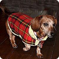 Adopt A Pet :: Koya - Louisville, CO