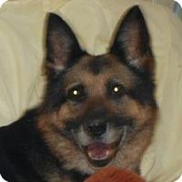 Adopt A Pet :: Bonnie ADOPTED!! - Antioch, IL