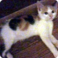 Adopt A Pet :: Eden - Jacksonville, FL