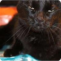 Adopt A Pet :: Carl - Xenia, OH
