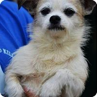 Adopt A Pet :: Caesar - Staunton, VA