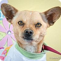 Adopt A Pet :: Milo - San Marcos, CA