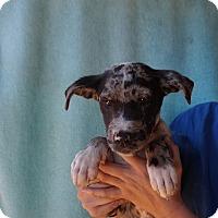 Adopt A Pet :: Thyme - Oviedo, FL