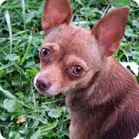 Adopt A Pet :: Ronin - Lafayette, IN