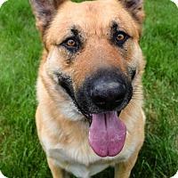 Adopt A Pet :: Deacon - Prosser, WA