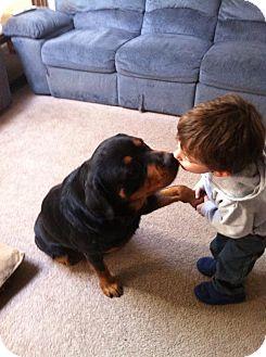 Rottweiler Dog for adoption in Frederick, Pennsylvania - Luna