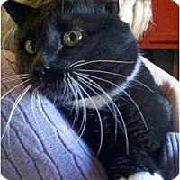 Adopt A Pet :: Bruce - Trexlertown, PA