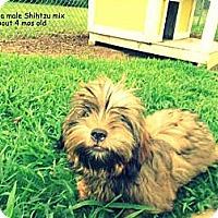 Adopt A Pet :: Keanu - Gadsden, AL