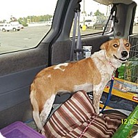 Adopt A Pet :: Rozee - Farmingtoon, MO