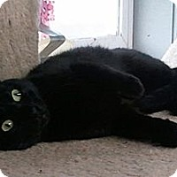 Adopt A Pet :: Bonita - Anchorage, AK