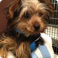 Adopt A Pet :: Freddy - North Benton, OH