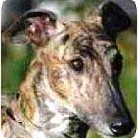 Adopt A Pet :: Chili - Orange County, CA