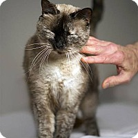 Adopt A Pet :: Queenie - Drippings Springs, TX