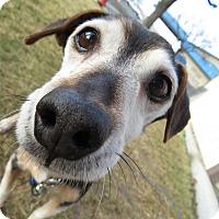 Adopt A Pet :: Betty - Meridian, ID