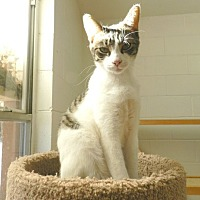 Adopt A Pet :: Justy - Ozark, AL