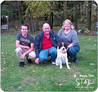 Border Collie Mix Dog for adoption in Northville, Michigan - zPiper - ADOPTED