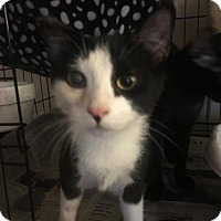 Adopt A Pet :: Katara (& Tank) - Herndon, VA
