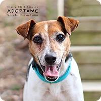 Adopt A Pet :: Skippy - Edwardsville, IL