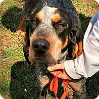 Adopt A Pet :: Emil Muzz - Sweetwater, TN