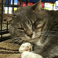Adopt A Pet :: Locke - Lyons, IL