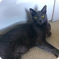 Adopt A Pet :: Winston - O'Fallon, MO